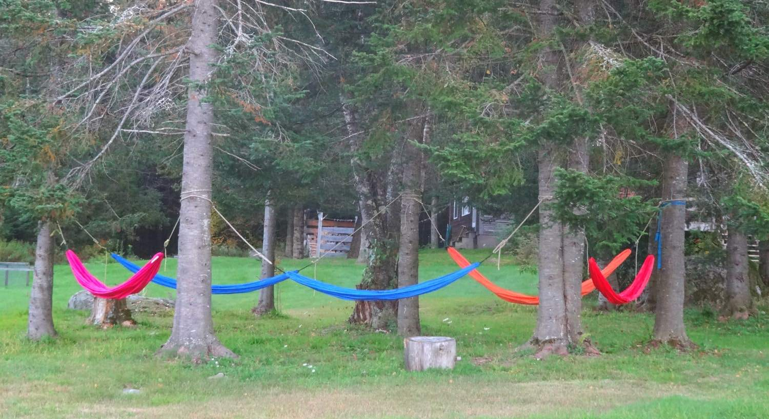 Colorful hammocks hanging from trees