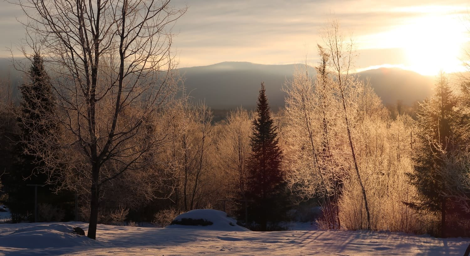 The sun setting behind the distant hills in the winter with bare trees, pine trees and snow-covered ground in the foreground