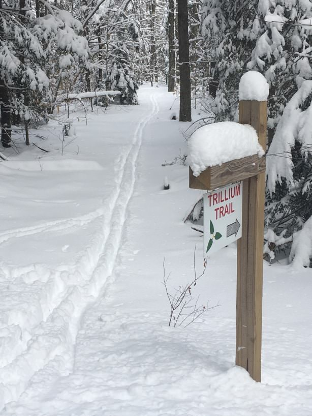 Wooden sign post with arrow to the Trillium Trail and a snow-covered trail surrounded by snow-capped trees