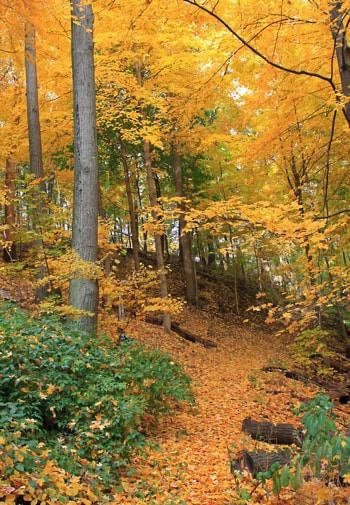 Path covered in yellow and orange fallen leaves and surrounded by trees with green and golden yellow leaves